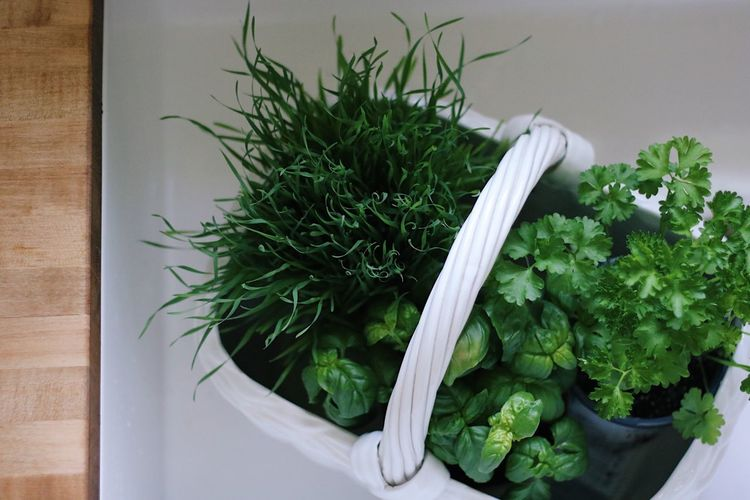 White Color Wood Countertop Wood - Material Basket Sink Basil Wheatgrass Vegetable Food Healthy Eating Herb Freshness Green Color No People Indoors  Plant Part Parsley High Angle View Plant Still Life Leaf