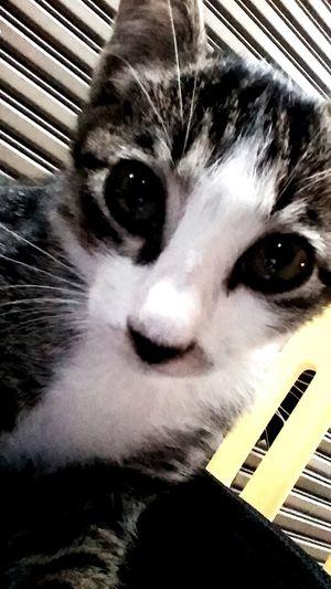You are amazing.. EyeEm Animal Lover EyeEm Nature Lover Hi! Taking Photos Love♥ Kittycuty Capturing Freedom