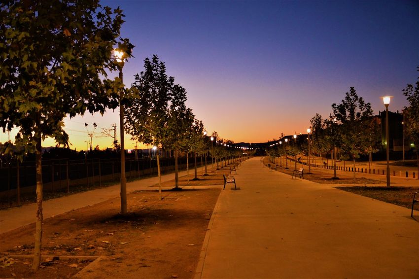 Walking Around Beauty In Nature Clear Sky Cold Temperature Day Nature Night No People Outdoors Sky Sunset The Way Forward Tree Walking Around The City