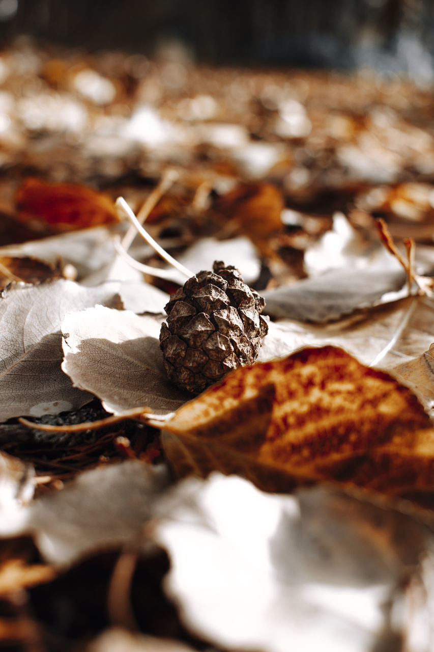 food and drink, food, freshness, close-up, indoors, still life, selective focus, no people, fruit, indulgence, healthy eating, dry, table, ready-to-eat, focus on foreground, wellbeing, nut, leaf, nut - food, sweet food, temptation, snack, leaves