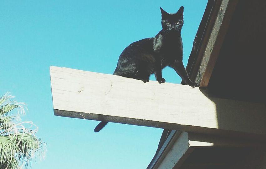 Cats Of EyeEm Cute Pets Blackcatsbringluck Alwaysintosomething Mischievous Troublemaker Lovemycat Mini Panther