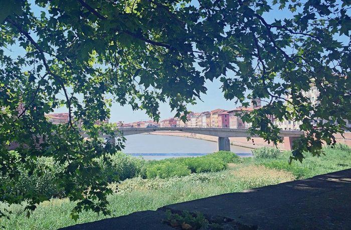 Pisa Pisa, Italy Arno  Arno River Along The River Riverside Riverside Photography Walk Walking Around Shade Of Tree Memories Masako201607