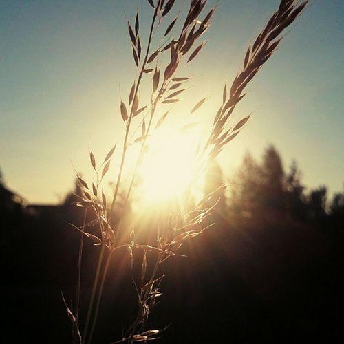 Weekend Sun Sunny Corn Horizon Poland Summer Haveaniceday June Lovely Nature Country BeautifulPic Instaphoto Instaday Instanature EwaJoannaMatczyńskaPhotography