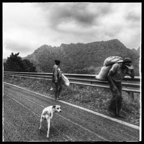 Rural Scene Mexico Travel Blackandwhite Iphonephotography Domestic Animals Animal Themes Dog Mammal Pets One Animal Full Length Tree Sky Day Outdoors Friendship One Person Nature Young Adult Monkey