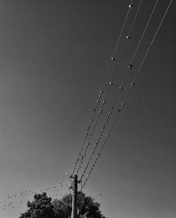 Black & White Birds Geometry
