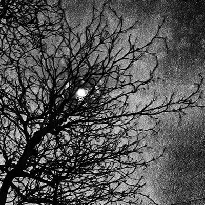 De esas noches cuando la luna se anda entre las ramas. Igss_bw Nsbmexico Bwstylesgf Bnwlife igss_bw wu_mexico ig_mexusa icu_mexico igersmexico igersdf igerspuebla igersqro igersveracruz igersoaxaca igersqro mexigers mexicolors mexico_maravilloso
