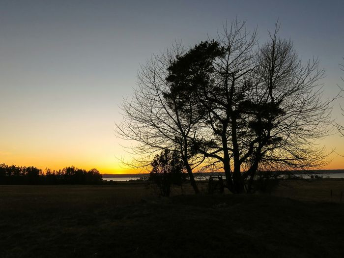 Stone Cist Historic Site Visingsö 4000 Yrs Sunset Evening Sky Orange Sky Trees 👍🌞