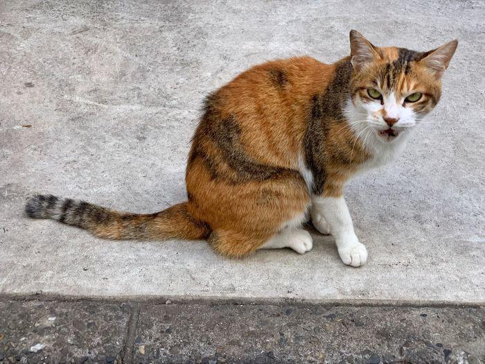 el gato Gatto 猫