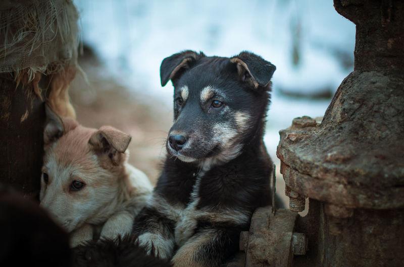 Mammal Vertebrate Dog Dogs Of EyeEm Dog Love Nikon Nikonphotography 50mm Russia Puppy Puppy Love Homeless Homeless Dogs Mongrel Mongrel Dog Cross Kid Nikon5100 Nikon5100D Lightroom 50mm 1.4 Nicely
