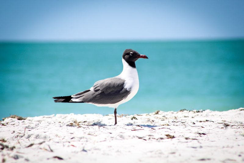 Seagull In Sand At Beach Against Sky