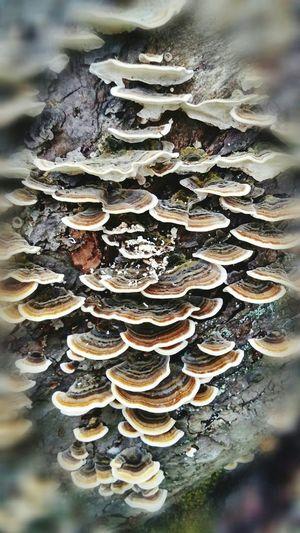 Depth Of Field fungus on apple tree