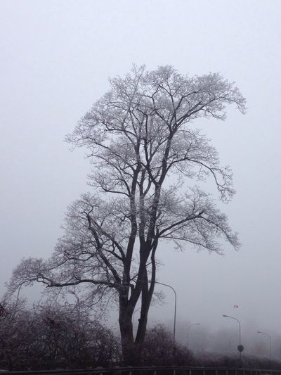 Frozen in time Tree Nature Bare Tree No People Tranquility Beauty In Nature Isolated Day Outdoors Roots Of Life Winter