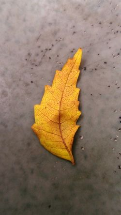 Yellow Leaf Autumn No People Textured  Spotted Nature Close-up Outdoors Day Love NewHere ✌🏽️😄 NewEyeEmPhotographer Like4like Macro Photography EyeEmNewHere