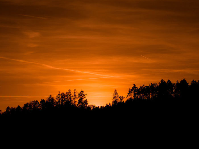 Silhouettes of trees - EyeEm Best Shots EyeEm Nature Lover EyeEm Selects EyeEm Gallery EyeEmNewHere Nature Beauty In Nature Cloud - Sky Dramatic Sky Environment Idyllic Landscape Nature Non-urban Scene Orange Color Outdoor Photography Outdoors Plant Scenics - Nature Silhouette Sky Sunset Tranquil Scene Tranquility Tree