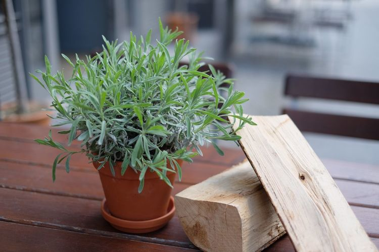 Close-up of potted plant by log on wooden table