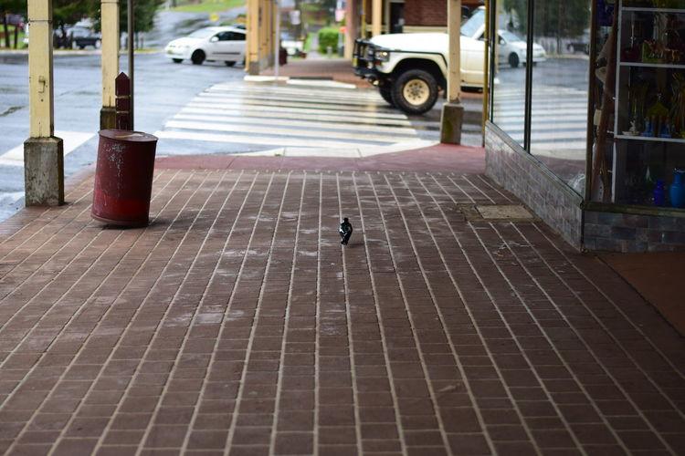 Australia EyeEmNewHere Dorrigocity Nikonphotography Small Town Stories Travel Destinations
