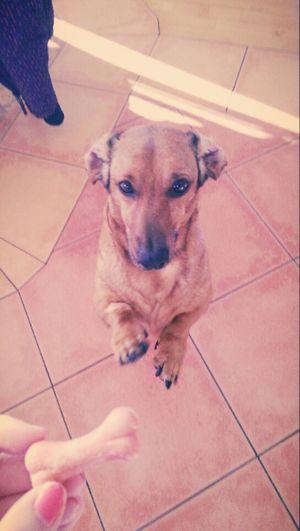 Dogs Dogoftheday Hello World Love <3