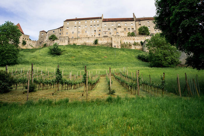 Vineyards growing on a hillside Architecture Beauty In Nature Building Exterior Built Structure Castle Day Grass Green Color Growth Landscape Nature No People Outdoors Scenics Sky Tranquility Travel Destinations Tree Vineyard Vineyard In Spring