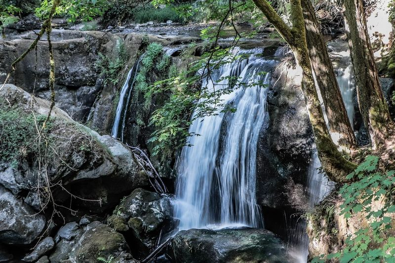 Tree Water Plant Beauty In Nature Waterfall Scenics - Nature Forest Flowing Water Motion No People Nature Long Exposure Day Land Rock Growth Blurred Motion Flowing Non-urban Scene Outdoors