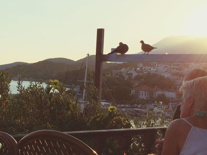 Sunset Summer Summertime Turkey Kas Birds Enjoying The View Great Views