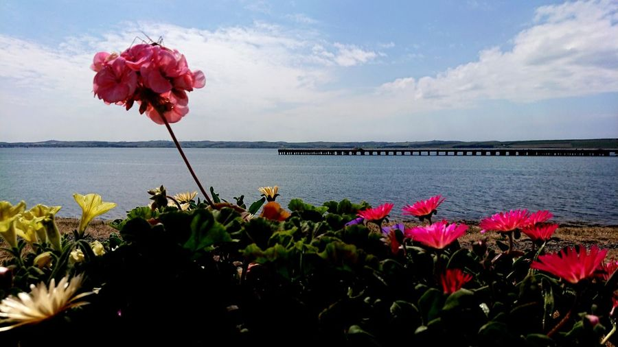 Where colours meet the sea Angle Focus Perspective Pier Jetty Harbour View Harbour Scotland Beauty In Nature Skyline Coastline Uk Sunlight Flower Head Flower Water Sea Beach Red Pink Color Petal In Bloom
