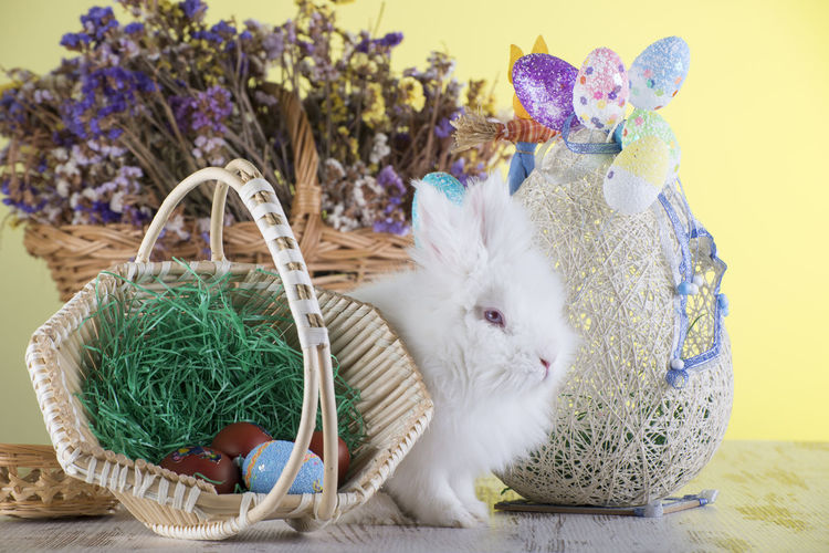 Rabbit and easter decorations on table against wall