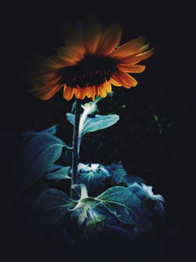 Enjoying Life Nature EyeEm Nature Lover 夏 Summer 花 Flowers 闇属性
