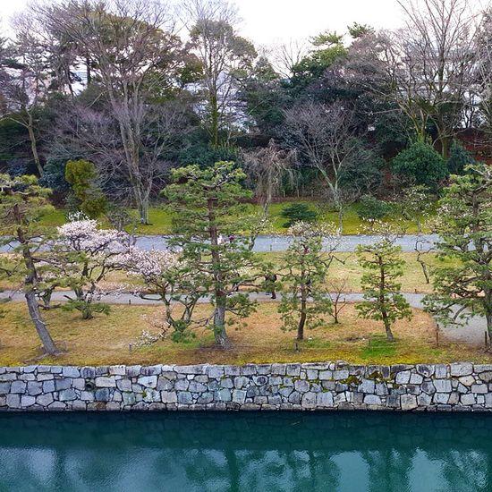 I love the mizu no iro. *0* Nijocastle Castle Moat Nijo Castle Moat Nijo Castle Garden
