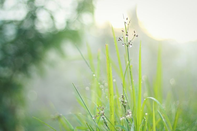 Good morning Nature Plant Grass Outdoors Growth Green Color Beauty In Nature No People Landscape Close-up Day Eyeem Market EyeEm Gallery