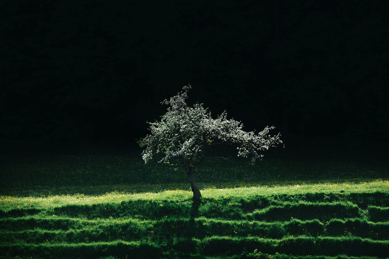 Tree Growing On Grassy Field