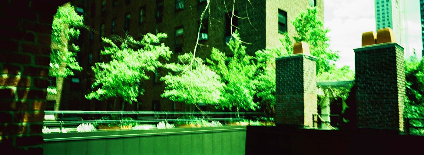 Koduckgirl Film Building Exterior Architecture Built Structure Green Color NYC Xpro Film Velvia50 Hasselblad XPan