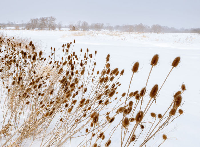 Plants on field against sky during winter