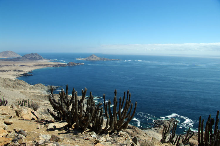 Caldera Chile Conaf Desertic National Park Panorama Arid Climate Beach Beauty In Nature Blue Cloud - Sky Day Horizon Horizon Over Water Land Nature No People Non-urban Scene Outdoors Pacific Ocean Pan De Azucar Rock Rock - Object Scenics - Nature Sea Sky South America Tranquil Scene Tranquility Travel Destinations Water The Great Outdoors - 2018 EyeEm Awards