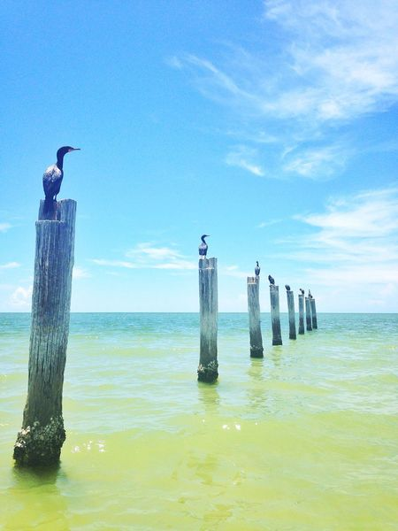 Ocean View Ocean Beach EyeEm Nature Lover Birds Bird Photography Florida Fort Myers United States Capture The Moment