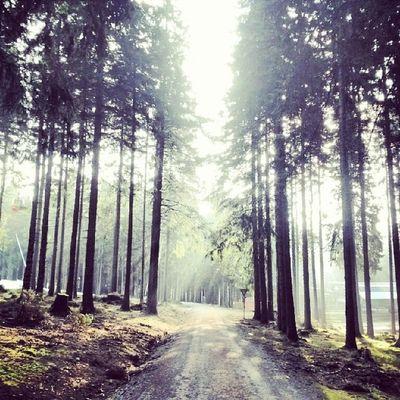 Wernigerode Brocken Harz Medletik draußenzuhause