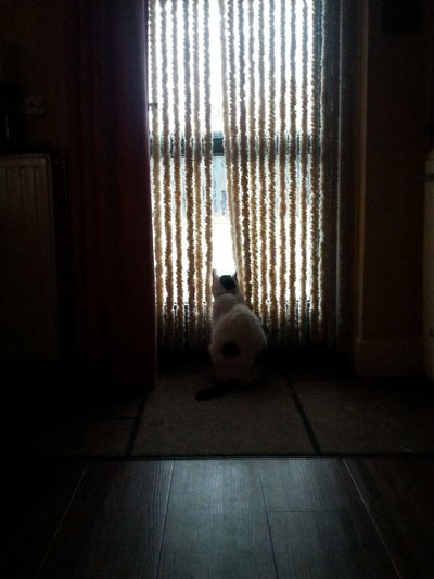 Window Pets