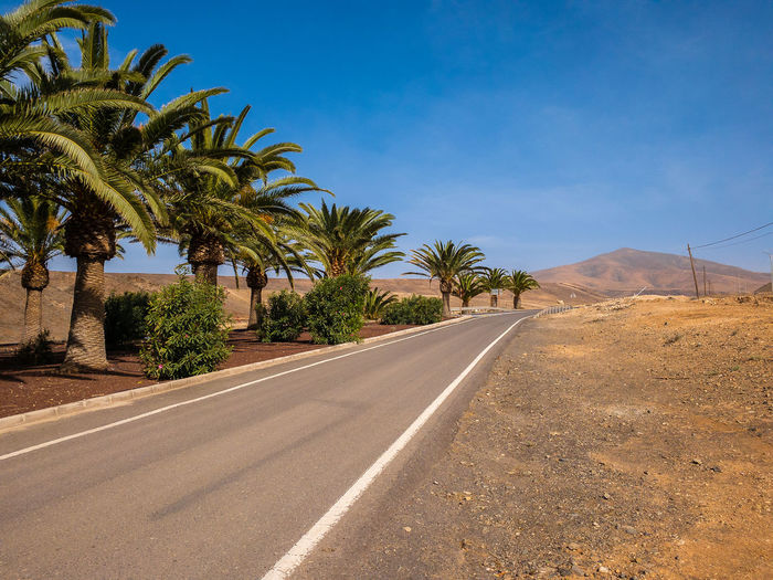 Palm trees by road against blue sky