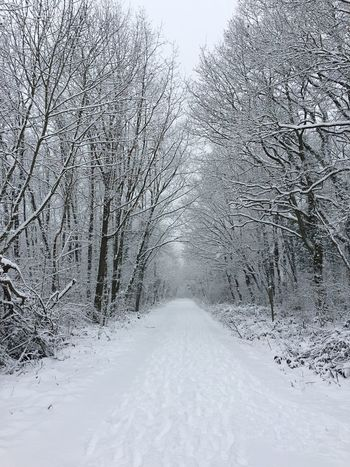 winter Snow Winter White Color Forest Snowing Forestwalk