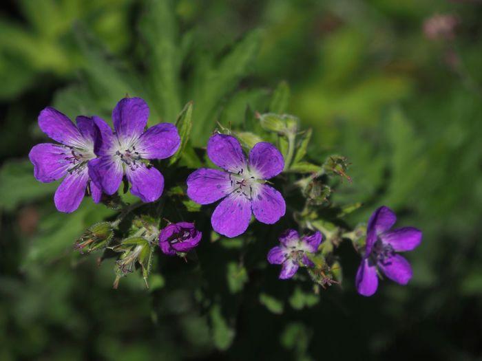 Blumen EyeEm