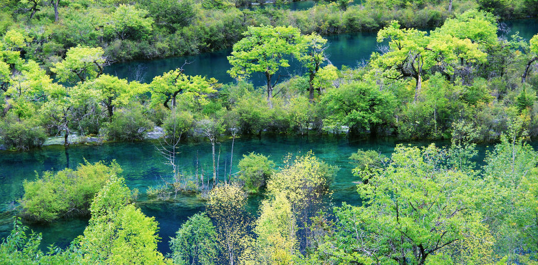 Water Tree Plant Lake Beauty In Nature Green Color Tranquility Tranquil Scene Nature Growth Forest Day Scenics - Nature No People Outdoors Jiuzhaigou Jiuzhaigou National Park