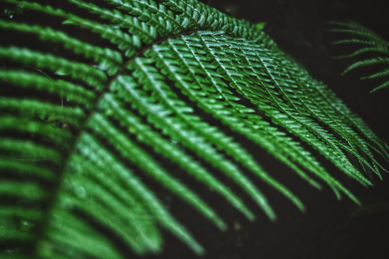 green color, leaf, growth, close-up, selective focus, nature, no people, pattern, fern, plant, full frame, beauty in nature, backgrounds, day, fragility, freshness, indoors, animal themes