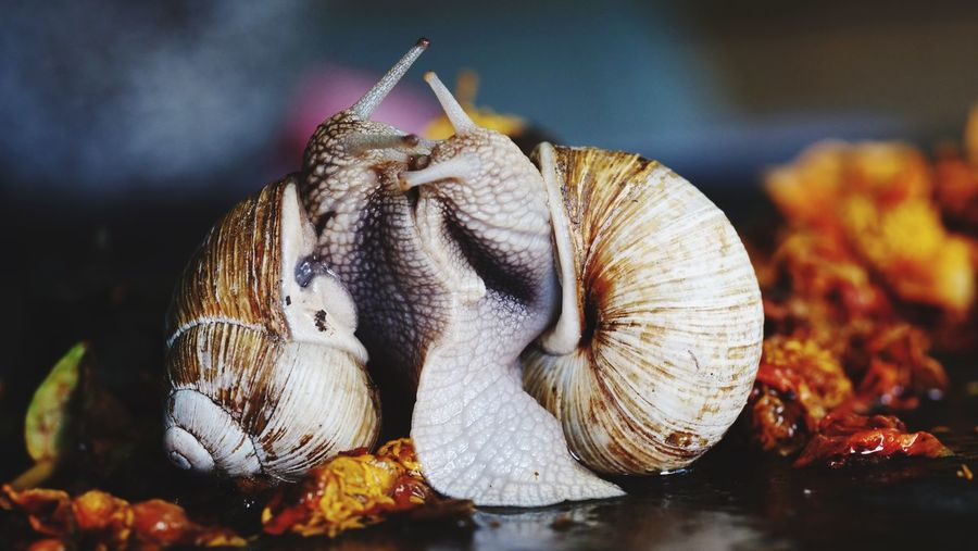 Snail Snail Closeup Snaiks Making Love Animal Themes Animals In The Wild Fragility Close-up Nature Animals In The Wild Reptile