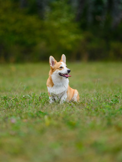 Small dog sitting on field