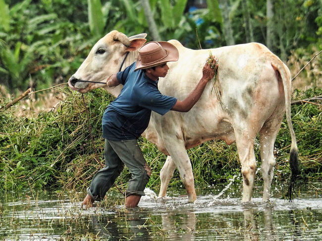 A Farmer washing his Cow... Showing Love Interaction People Photography From Where I Stand Taking Care Enjoying Life Showcase April