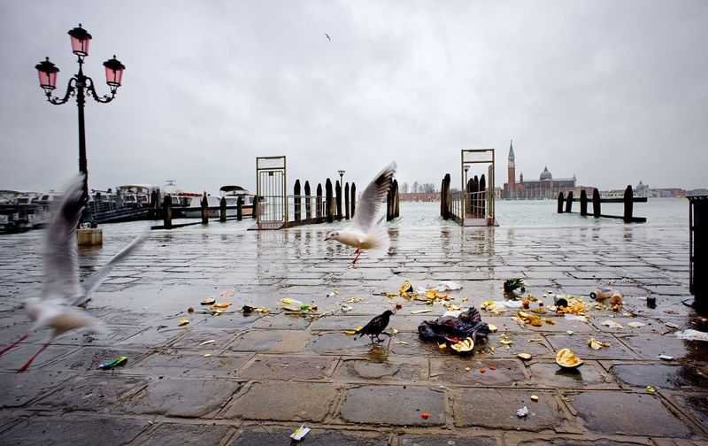 Italy, Venice, Grand Canal, Piazza San Marco, the flood, the Cathedral of San Marco Animal Themes Animals In The Wild Bird Black And White Contemporary Day Nature No People Outdoors Pavement Protection Side By Side Side View Summer Two Animals Vacations Water Weekend Activities Wildlife Wood