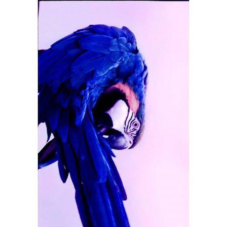 цветныекартинки Film Filmfoto 35mm Analogphotography Decor Design Art Photoart