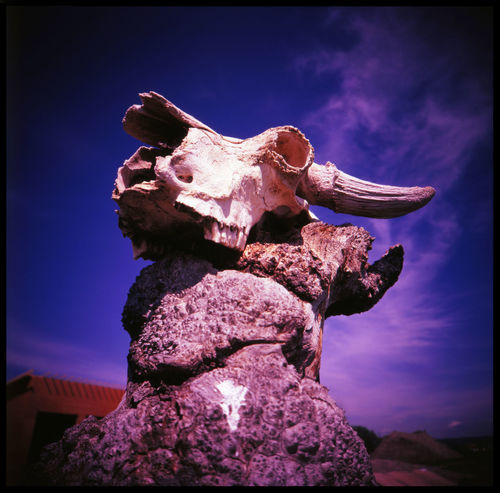 Brute force in Alberta Alberta Analogue Photography Brute Bull Skull Canada Canada Nature Devil's Coulee Dinosaur Excavation Dinosaurs Excavation Brush Excavation Site Excavation Work Medium Format Nature No People Outdoors Science Skull And Sky Skulls Sky Over Alberta Sky Over Canada Slide Photography Travel Warner Wendiceratops The Great Outdoors - 2017 EyeEm Awards