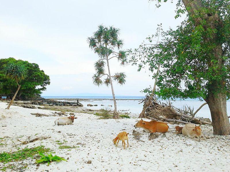 Edge Of The World Sabangisland Wehisland Acheh INDONESIA EyeEm Nature Lover Nature Photography By Ismi_zuehaira