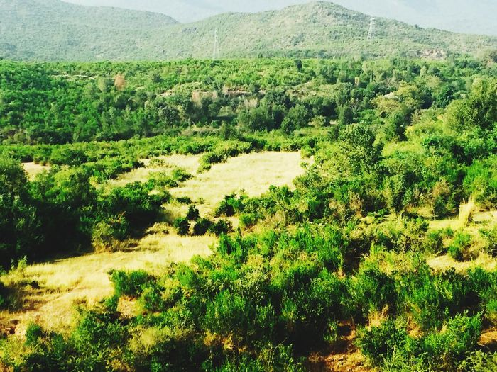 Brautiful View of Islamabad Beauty In Nature First Eyeem Photo