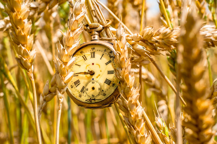 Close-up of clock against plants